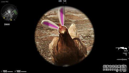 三伏天就能随便吃鸡?还有一些鸡你惹都惹不起!
