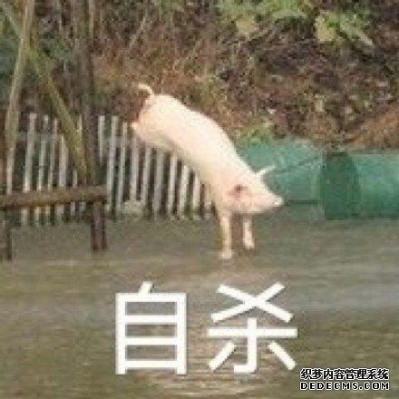 看以后谁还敢说猪赤月传说sf笨 每日轻松一刻4月9日周日版