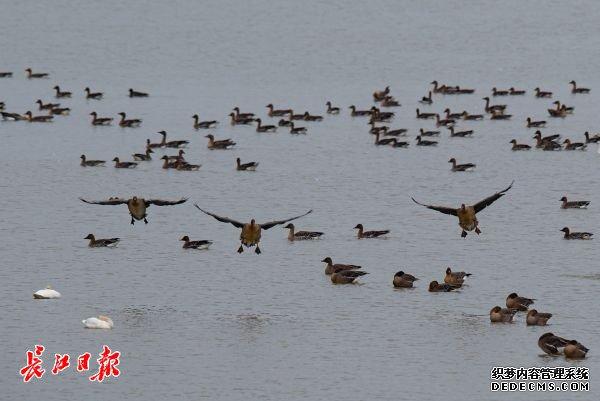 快来推荐你心目中的市鸟吧!武汉市市鸟评选启动